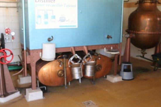 Visite de la distillerie Kario à Belley