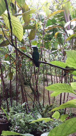 Bajos del Toro, Costa Rica: colibrì
