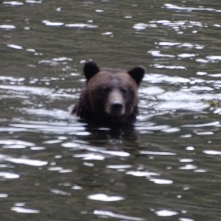 Great Bear Lodge: photo0.jpg