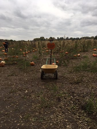 Stillwater, MN: The pumpkin patch