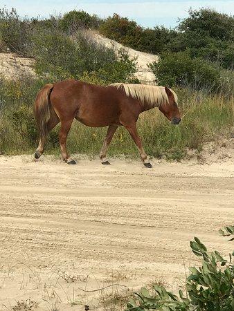 Wild Horse Adventure Tours: Wild mustang