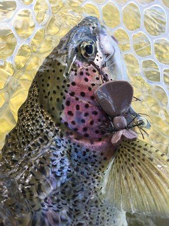 King Salmon Φωτογραφία