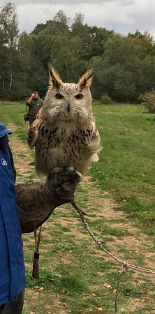 Landford, UK: Siberian Eagle Owl