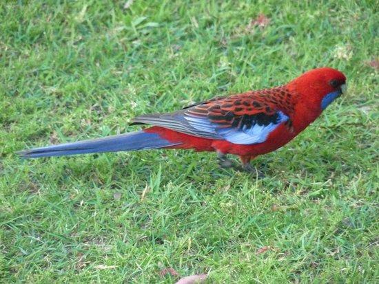 Lake Conjola, Australien: Uma variedade incrível de aves