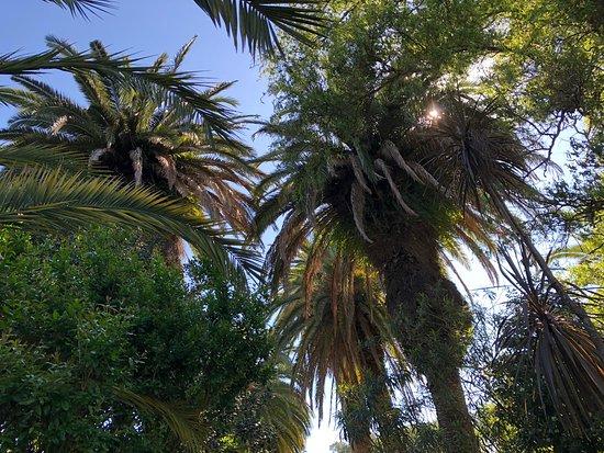 Delta El Tigre: Parrots and Palms