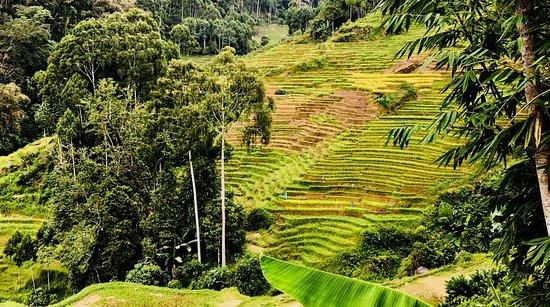 Tana Toraja 사진