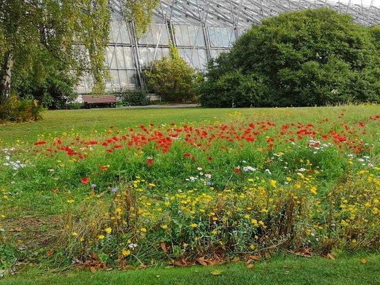 Royal Botanic Garden Edinburgh: IMG_20181016_102102_large.jpg