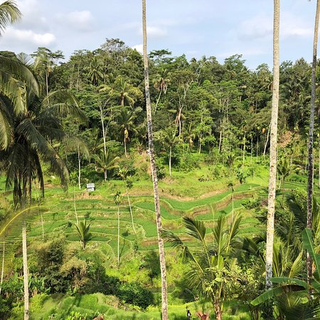 Tegalalang Rice Terrace: photo0.jpg