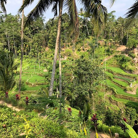Tegalalang Rice Terrace: photo1.jpg