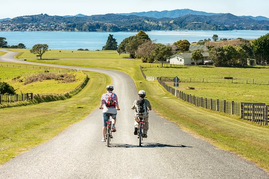 Twin Coast Cycle Transport and Bike Hire