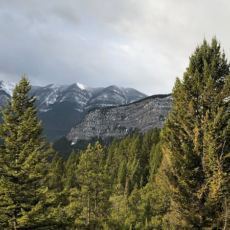 Discover Banff and its Wildlife tour