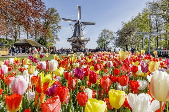 Keukenhof Gardens and Tulip Fields Tour...