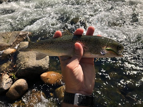 Kernville Inn: great fishing right across the street from your room
