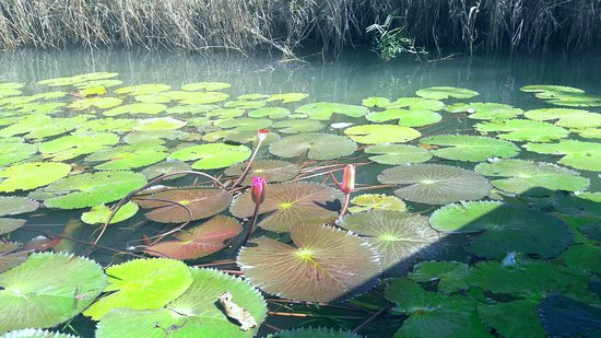 Ba Be National Park, เวียดนาม: Flowers in the lake