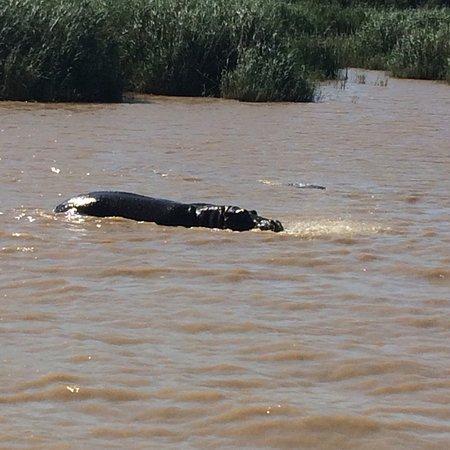 iSimangaliso Wetland Park, แอฟริกาใต้: photo0.jpg