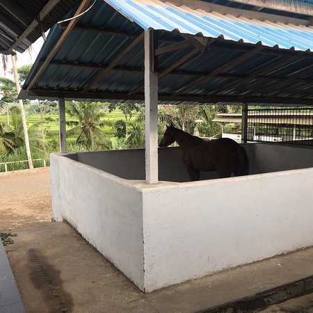 Ubud Horse Stables: photo1.jpg