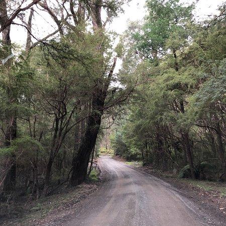 Gembrook, Austrália: Beenak G180 Bushland Reserve