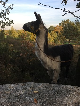 Heide-Lama-Trekking Day Tours