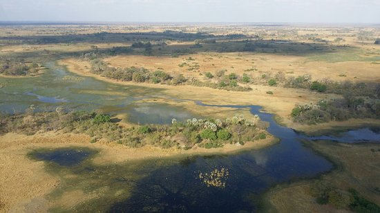 Okavango Delta Photo