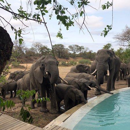 Ngala Private Game Reserve, Südafrika: photo2.jpg