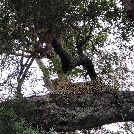 Ngala Private Game Reserve, Südafrika: photo3.jpg