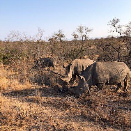 Ngala Private Game Reserve, Südafrika: photo5.jpg