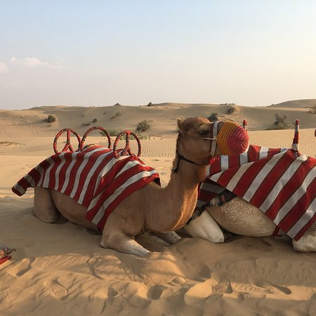Dubai: Sunset Camel Trek & Red Dunes Safari with BBQ at Al Khayma Camp 사진