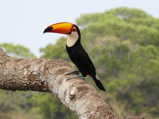 Silva Tour Pantanal