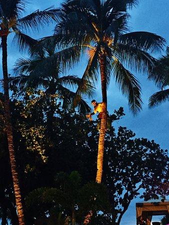 Luau - Tree Climbing