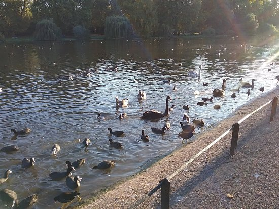 Some of the fascinating water fowl in the park.