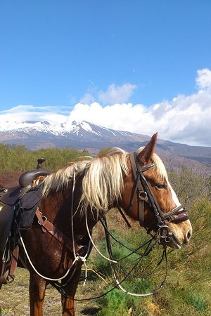 Belpasso, Italy: Welcome to our beautiful Etna region in Sicily. Let horses and nature wake up your soul.