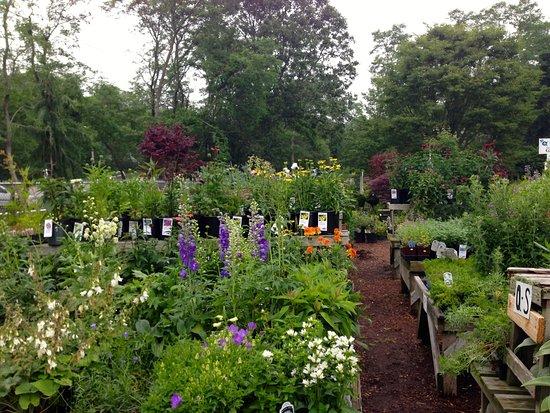 Truro, แมสซาชูเซตส์: Bayberry Gardens