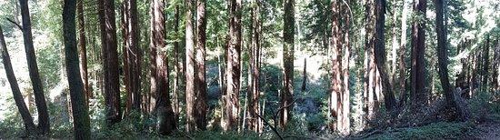 On the Wilder Ridge Trail