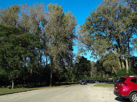 Schiller Woods