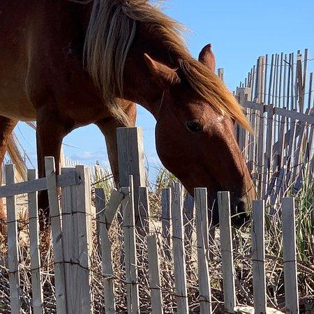 Wild Horse Adventure Tours: photo3.jpg