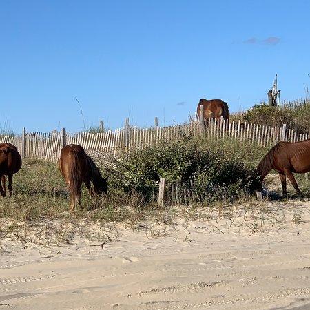 Wild Horse Adventure Tours: photo4.jpg
