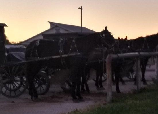 มอนต์กอเมอรี, อินเดียน่า: More Amish Family Transportation