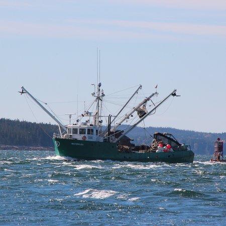 Bass Harbor, ME: photo2.jpg