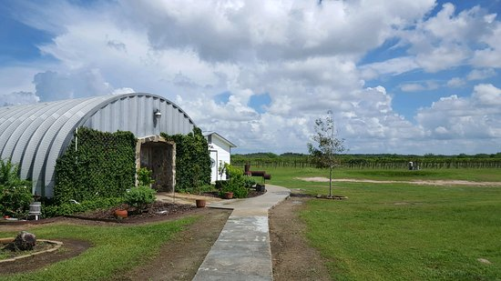 Refugio, TX: Tasting room and vineyard