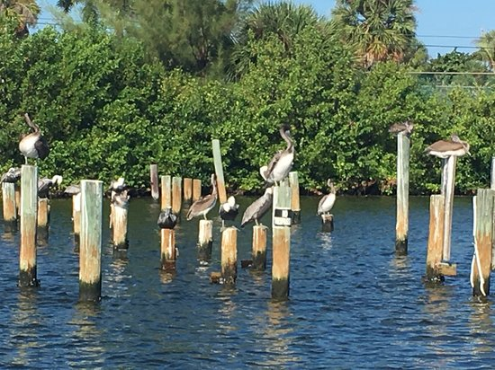 Charlotte Harbor Tours-bild