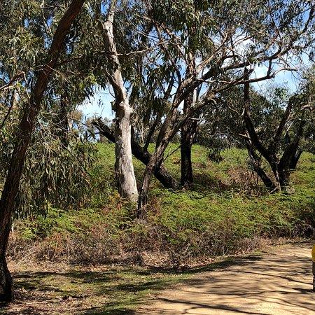 Woodland Picnic Area