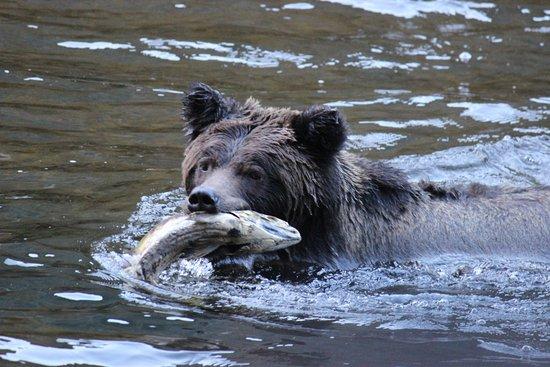Foto de Great Bear Lodge