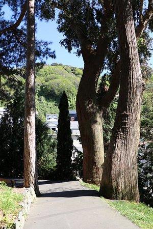 Wellington Botanic Garden: 20181007195245_IMG_6258_large.jpg