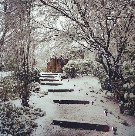 Winter Wonderland In Our Gardens