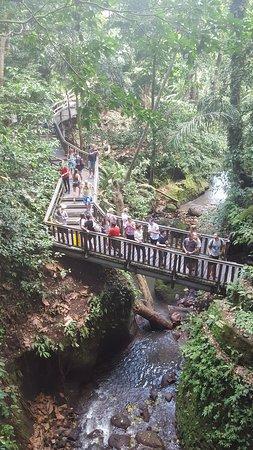 Sacred Monkey Forest Sanctuary: Mokey forest