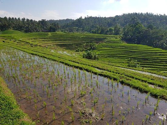 Selemadeg, Indonesien: 20181016_084512_large.jpg