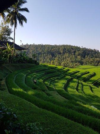 Selemadeg, Indonesien: 20181016_081045_large.jpg