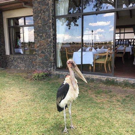 Mount Kenya National Park, Kenya: photo6.jpg