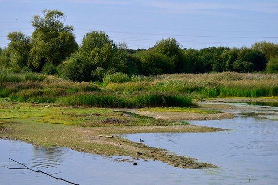 Rye Meads Nature Reserve: lakeside