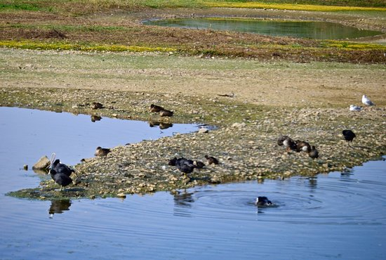 Rye Meads Nature Reserve: waterfowl on lakeside